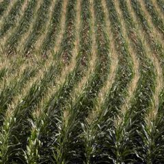 Allarme Coldiretti: troppo caldo, colture umbre a forte rischio