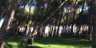 Terni, viale Centurini: abbattuto un albero