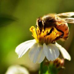Terni, boom interventi per calabroni e vespe