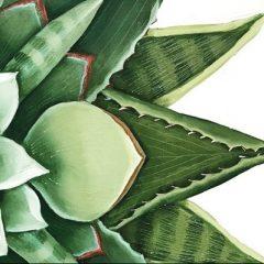 Amelia, in mostra 'Kaleidos' di Rogani
