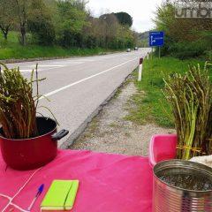 Terni, asparagi 'd'oro': 200 euro in un giorno