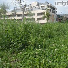 Terni, verde pubblico: scatta il presidio