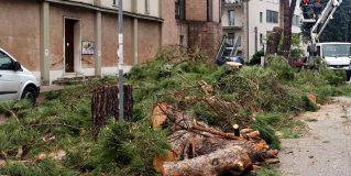 Perugia, il Comune dichiara guerra ai pini