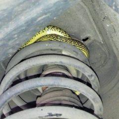 Terni, trova serpente d'un metro sotto l'auto