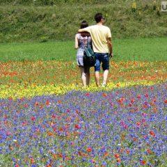 Castelluccio, tripudio di colori per la fiorita