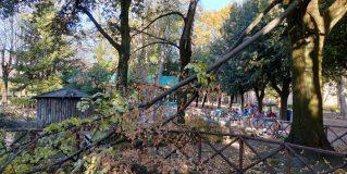 Terni, 'La Passeggiata': giù rami di tiglio