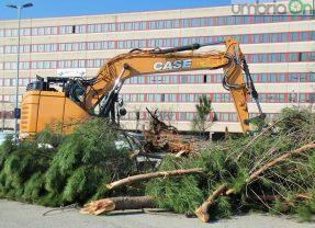 Terni, via Bramante: partito il taglio dei pini