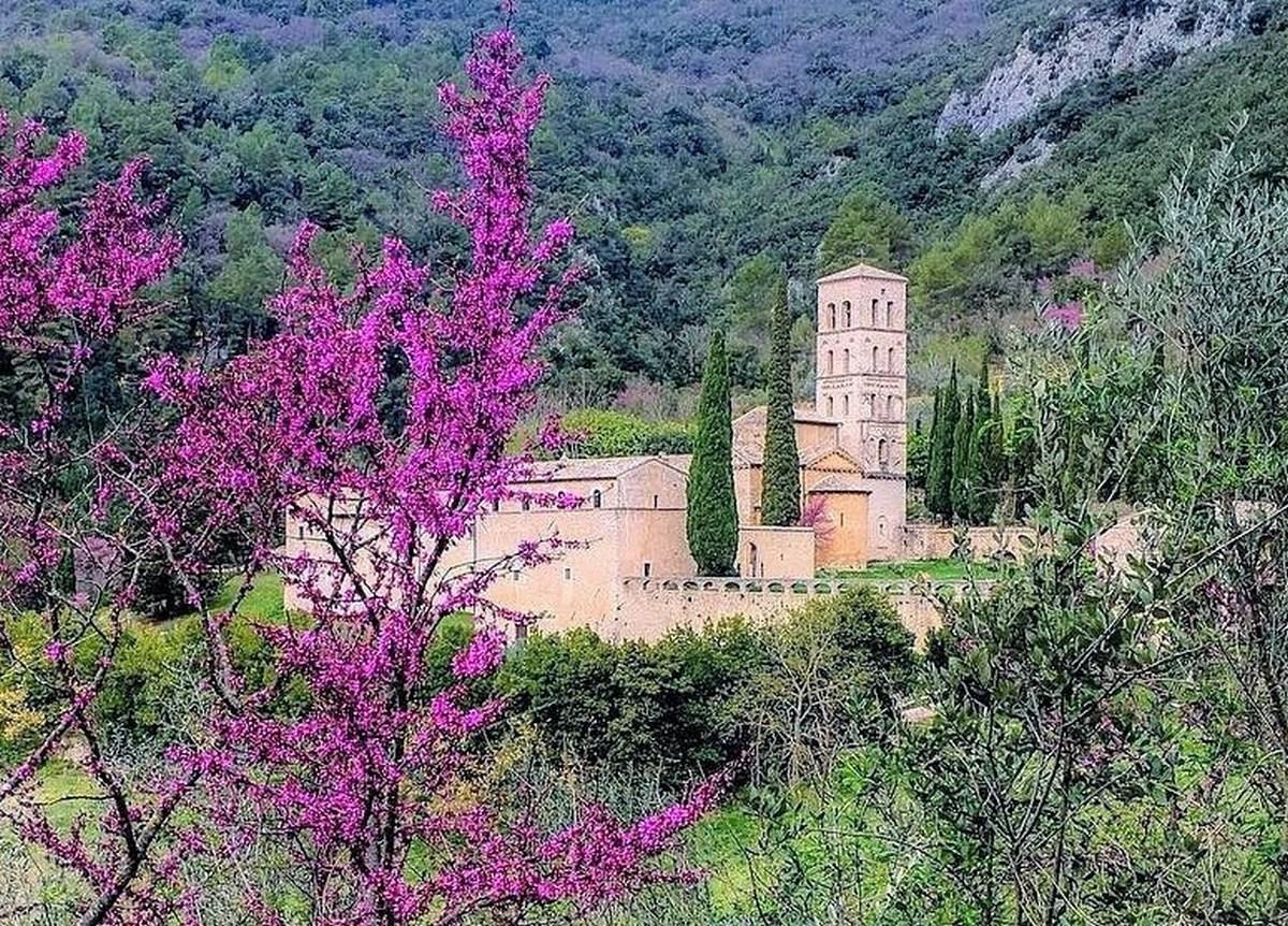 Albero Di Lillà con 'l'albero di giuda', valnerina a tinte rosa | umbriaon