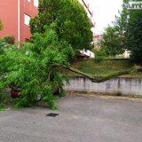 Terni, via Pratesi: ramo albero su auto