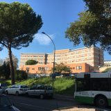 Ospedale, via 61 alberi: «Ne pianteremo altri»