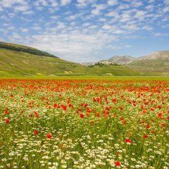 Castelluccio, la fiorita incanta ed è speranza