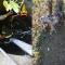 Cade in un pozzo, cane salvato dal 115