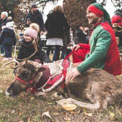Al Clt tornano le renne di Babbo Natale