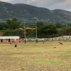 Covid, Terni Rugby: ripresa l'attività