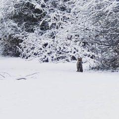 Polino e Stroncone, neve a volontà – Foto