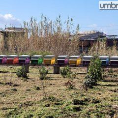 Ast, le api diventano 'sentinelle' della qualità dell'aria