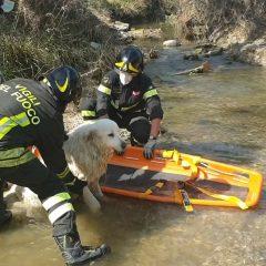 Narni Scalo, vigili del fuoco salvano cane in un fosso – Video