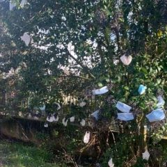 L'albero delle mascherine emblema dell'ex 'cuore verde'
