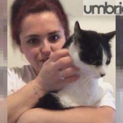 Ritrova il gatto dopo 16 mesi e le salta in braccio: «Che gioia»