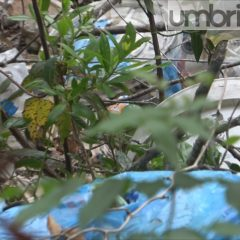 Le foto dello scempio: rifiuti pericolosi sul monte 'Pulito'