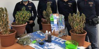 Terni, coltiva 'erba' in casa a Città Giardino: denunciato 44enne