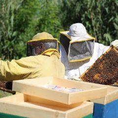 Le api dell'acciaieria si riproducono e aumentano di numero