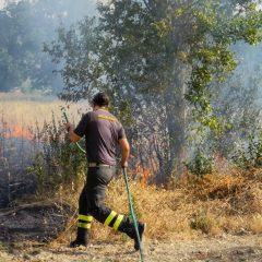 Incendio in un campo, le fiamme arrivano alle case e uccidono animali da cortile