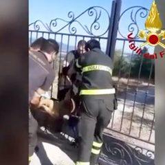 Capriolo intrappolato in un cancello salvato dai pompieri – Video