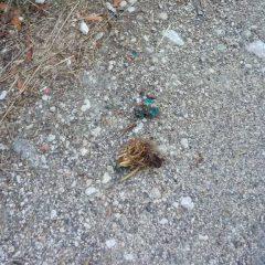 Bocconi avvelenati a Fontechiaruccia: nuovo episodio